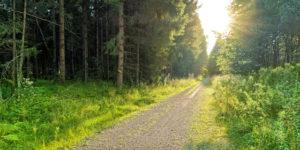 Skogsväg - Stora Enso Skog