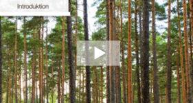 Film avancerad skogssköttsel - Stora Enso Skog