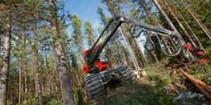 Gallring av tallskog