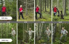 Skillnaden mellan skött och oskött skog