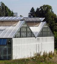Växthus - Stora Enso Skog