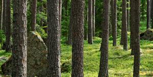 Förbehåll Gåva Stora Enso Skog