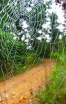 Spindelnät - Stora Enso Skog