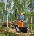 Timmer, björkskog - Stora Enso Skog