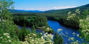 Vy över sjö och skog - Stora Enso Skog