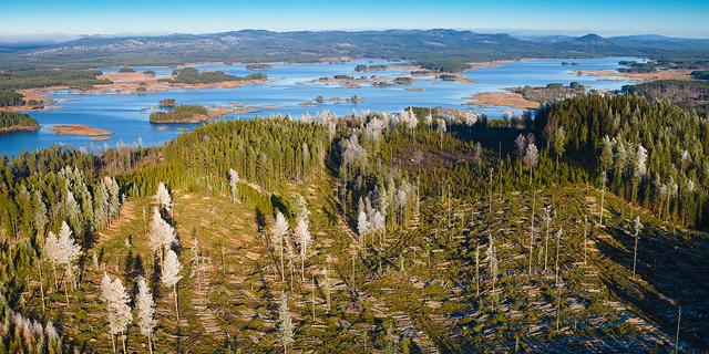 Omloppstider - Stora Enso Skog