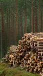 Timmer - Stora Enso Skog