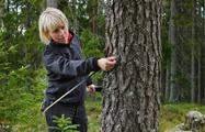Mätning - Stora Enso Skog
