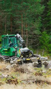 markeredning_stora_enso_skog