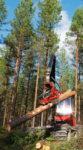 Gallring - Stora Enso Skog