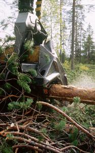 Skogsvård - Stora Enso Skog