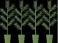 skogsvard_foryngr