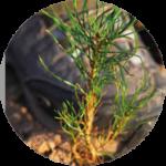 Nyskogsgaranti förvaltningsavtal