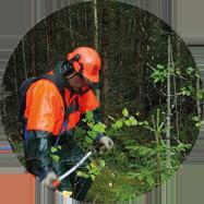 Planering av skogsskötseltjänster förvaltningsavtal