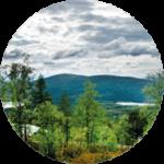 Förvaltningsavtal - Strategi för skogsägande
