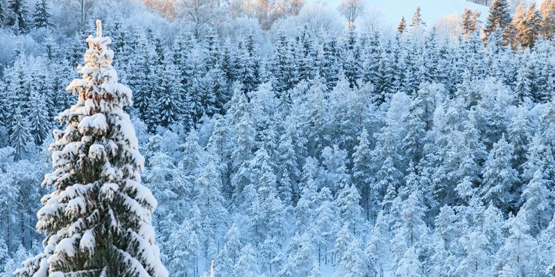 Snöbrott