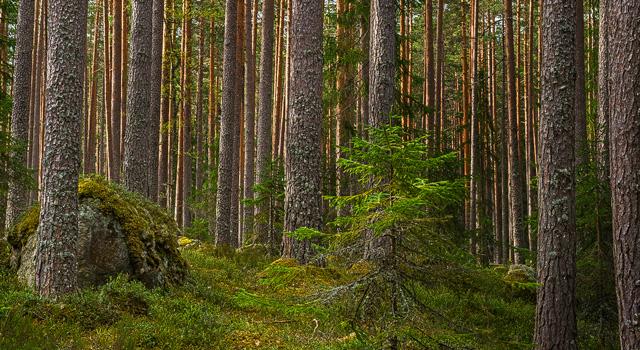 d0bfa68f Den som köper skog vill förstås känna sig trygg med att göra en bra affär.  Under 2011–2013 sjönk priserna på skogsfastigheter för att sedan  stabiliseras ...