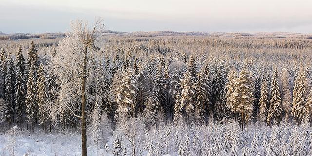 Stora Enso Skog Vinterlandskap Alfrida
