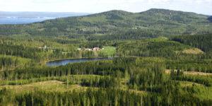 Stora Enso köper Bergvik skog