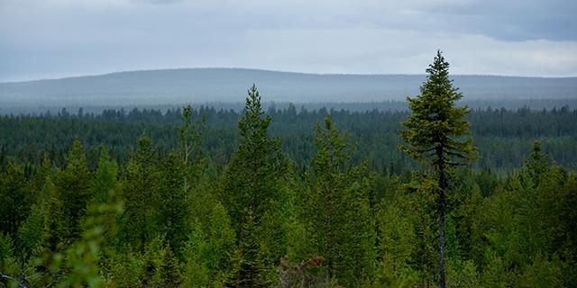 e5931a6e Stora Enso tar över 70 procent av marken i Bergvik Skog Väst. Innehavet  placeras i ett helägt dotterbolag, Silva AB, och skogen kommer att  förvaltas av ...