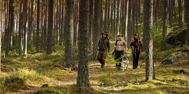 Tre jägare i skogen med en hund