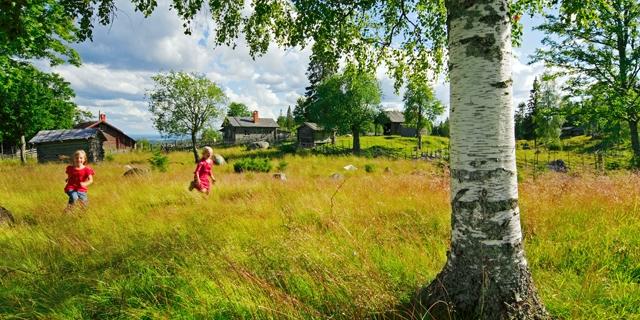 Barn springer - Stora Enso Skog