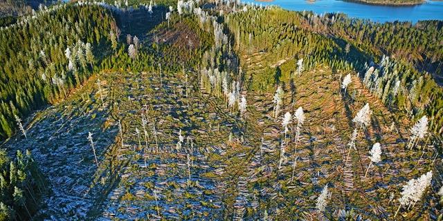 Avverkad skog med fröträd