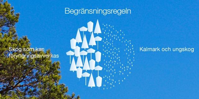 Begränsningsregeln - Stora Enso Skog