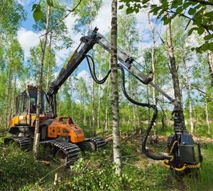Skogsmaskin i björkskog - Stora Enso Skog