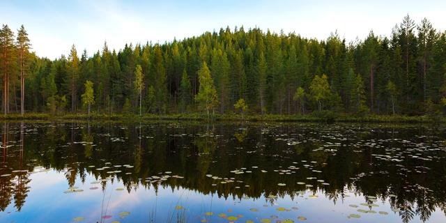 Sjö i skogen - Stora Enso Skog